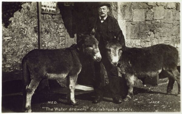 The water drawers - two donkeys called Ned and Jack - at Carisbrooke Castle, Isle of Wight. The well house and wheel are still operated by donkeys to this day and prove a huge tourist attraction. Date: circa 1930s