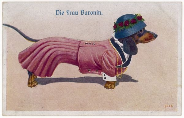 Dachshund dressed as a woman
