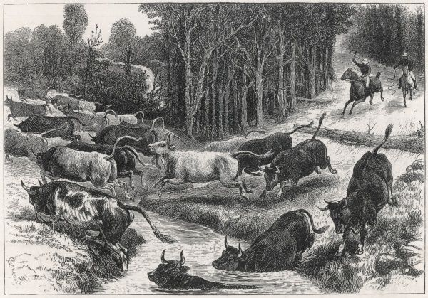 Farmers on horseback driving across a stream