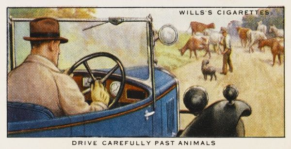 'Drive carefully past animals.&#39