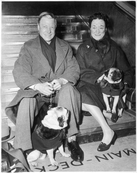 The Duke and Duchess of Windsor (formerly King Edward VIII and Mrs Wallis Simpson) shown with their beloved pug dogs. The dogs are wearing rather stylish coats