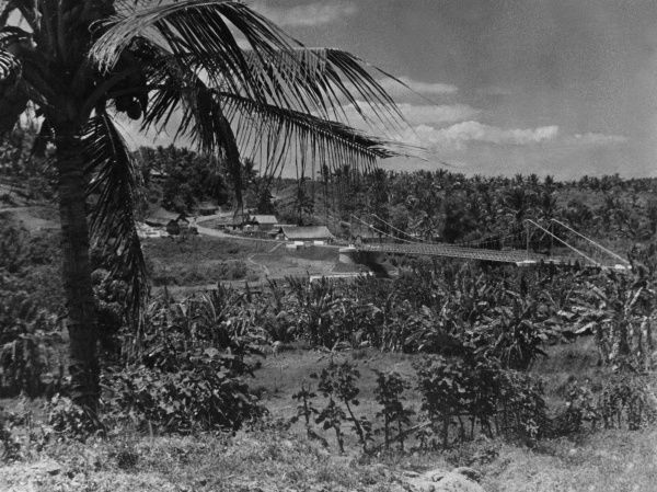 Coconut palm trees and a typical landscape scene in the Dutch East Indies (Indonesia). Date: 1930s