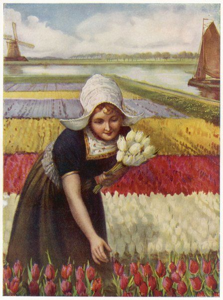 A Dutch girl in traditional dress picks tulips near a canal, with the obligatory windmill and barge in view