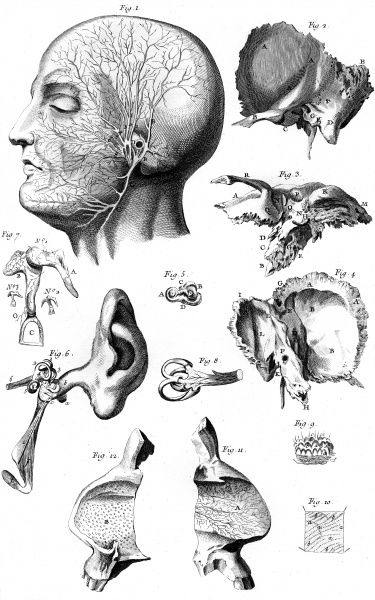 ANATOMY OF THE EAR Date: Circa 1760