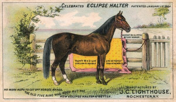 The 'Celebrated Eclipse Halter' - Horse Tack design patented in 1884. Date: circa 1900s