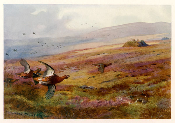 EDWARD VII Grouse moor at Balmoral - one of his favourite hunting grounds