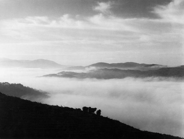 An eerie view at Coniston Water, Lake District, Cumbria, England, showing low cloud or mist obscuring the lake. Date: 1950s
