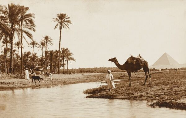 A view from an Egyptian oasis toward the distinctive outline of one of the pyramids at Giza in the background. An Egyptian man brings his camel to the water to drink. A very fine composition and scene