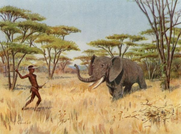 An African native prepares to hurl his spear at an oncoming elephant