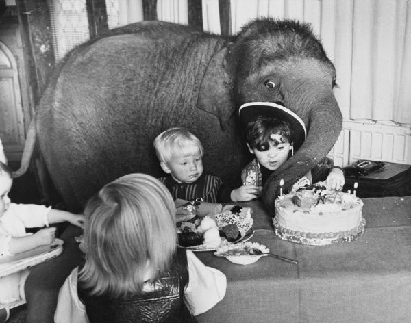 A baby elephant gate-crashes a children's birthday party and attempts to whisk away the birthday cake with its trunk! Date: 1960s