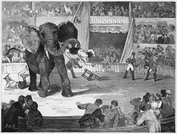 During a performance by the Circus Lorch, at Linz (Austria), the elephant, teased by the clowns, turns on them impatiently. Good on you, Jumbo !