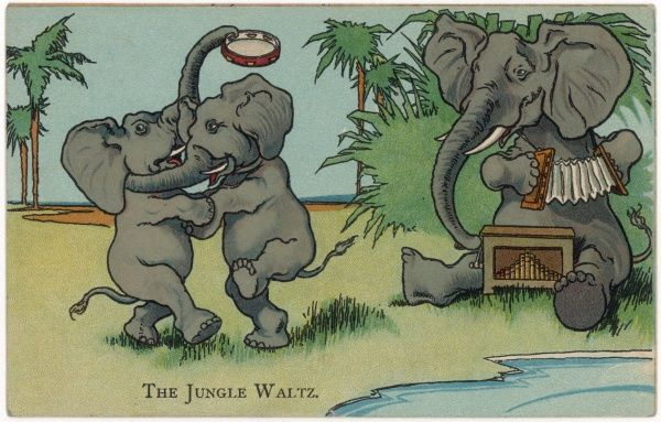 Two elephants perform the jungle waltz, accompanied by a friend on the accordeon