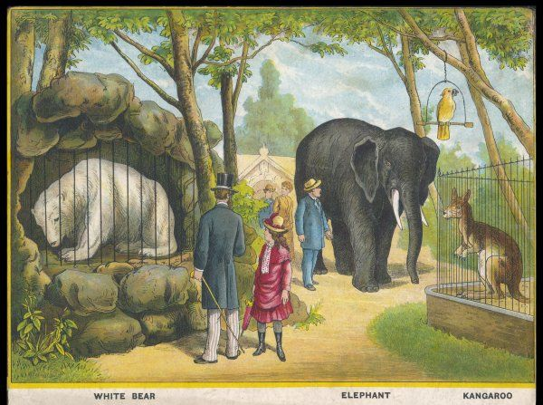 Regent's Park zoo, London Visitors admire the white bear, the elephant and the kangaroo