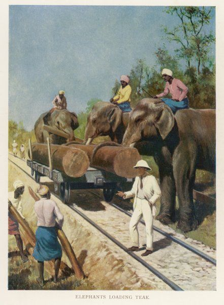 A colonial gentleman in a white suit supervises elephants loading teak from a rail carriage