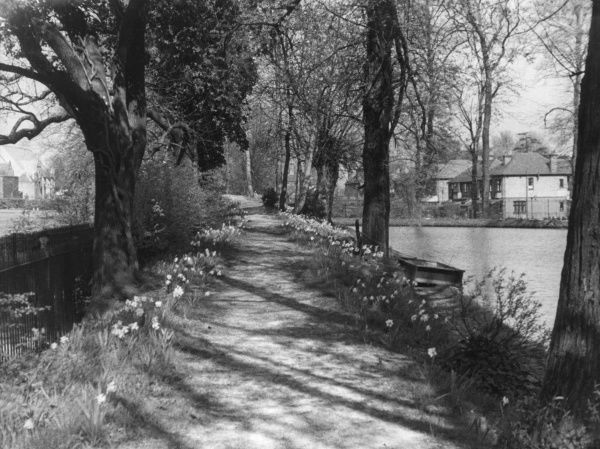 Springtime on a pathway beside the New River, Enfield, Middlesex, England. Date: 1930s