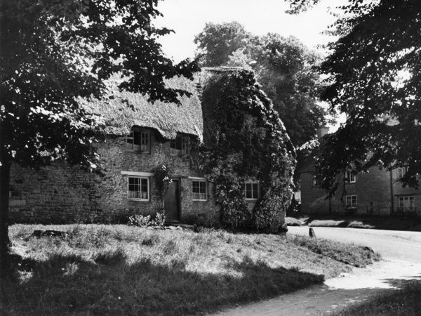 A lovely thatched cottage covered in roses in the pretty little village of Enstone, Oxfordshire, England. Date: 1930s