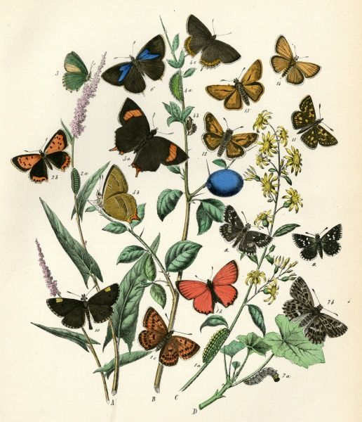 A variety of butterflies on foliage including the chequered skipper (no 11) Date: 1889