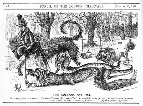 Fashions in dogs in 1889 : a lady takes her strange collection of new 'breeds' for a walk in the park
