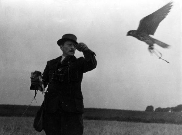 The falconer holds out his arm as the bird returns to him. Date: 1930s