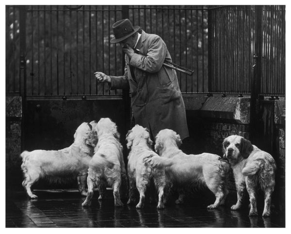 Mr Alfred Higgs, the King's Head Kennelman (since 1925) with a group of Sandringham Clumber spaniels. Owned and bred by King George V. Photographed at Sandringham