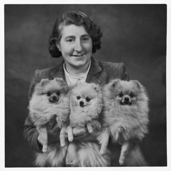 Mrs Dyke with three of her champion Pomeranians in her arms