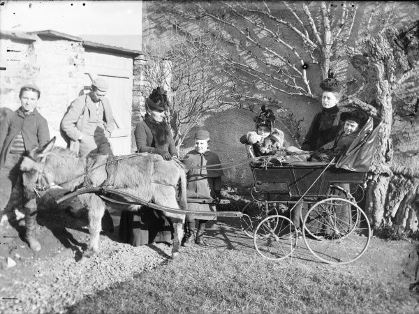 A large Edwardian family of seven with a donkey-drawn trap in a garden in Mid Wales. It is possible that the 'trap' has been constructed out of a pram