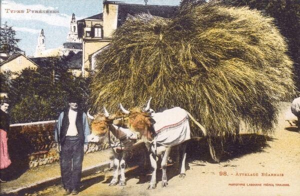 Farmer and his Oxen cart transporting a large volume of hay - Bearnais region. Date: circa 1910s