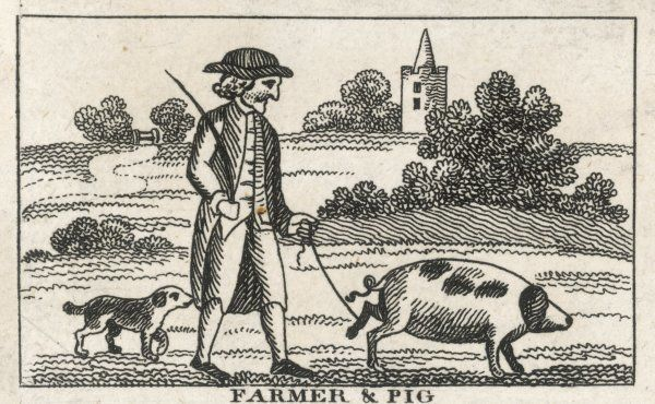 A farmer and his pig, tied by the leg