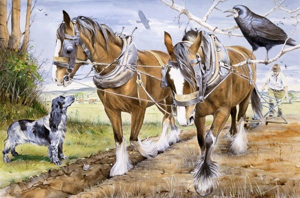 A team of two heavy horses plough a field, watched by a large crow and a pet springer spaniel. Watercolour painting by Malcom Greensmith Date: circa 1980