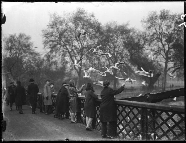 A group of vistors feeding gulls from the bridge in St. James's Park, London