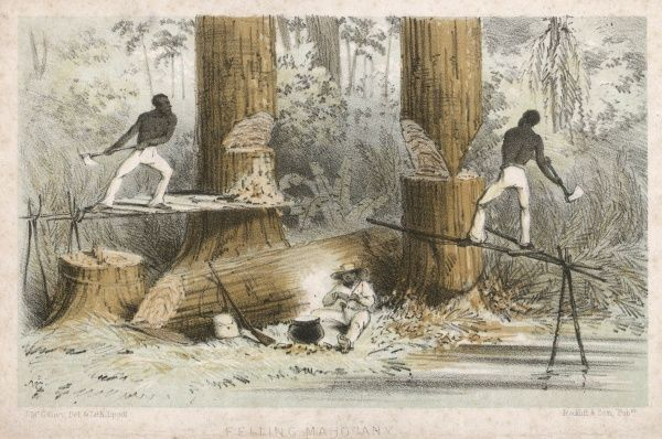 Felling mahogany in central America (or perhaps Guyana)