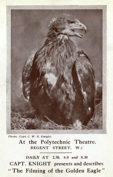 Postcard advertisement for Captain Knight's The Filming of the Golden Eagle, at the Polytechnic Theatre, Regent Street, London W1, with screenings three times daily. Captain Charles William Robert Knight (1884-1957) was a falconry enthusiast who travelled
