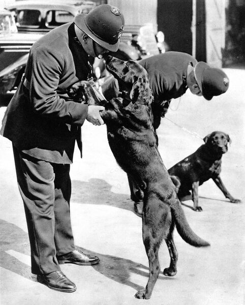 Front cover photograph showing two London policemen with the first Metropolitan police-dogs in 1938, thirty years after the first dogs were used by the North Eastern Railway Police to patrol Hull docks