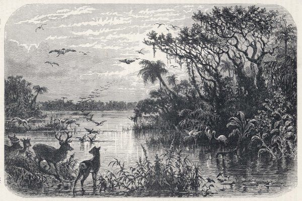 Deer and flamingoes are among the exotic fauna on a creek, tributary to the St Johns River, Florida