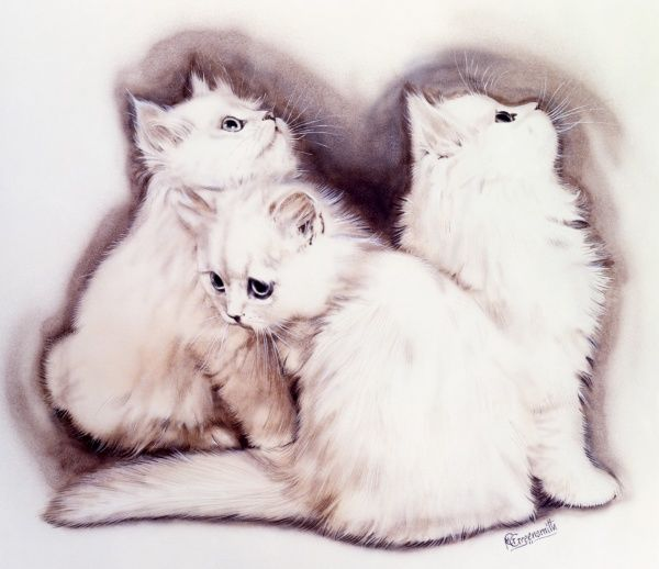 Three fluffy white kittens. Painting by Malcolm Greensmith