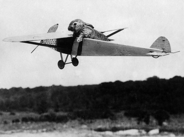 A model aeroplane with a rabbit as a pilot! Date: 1930s