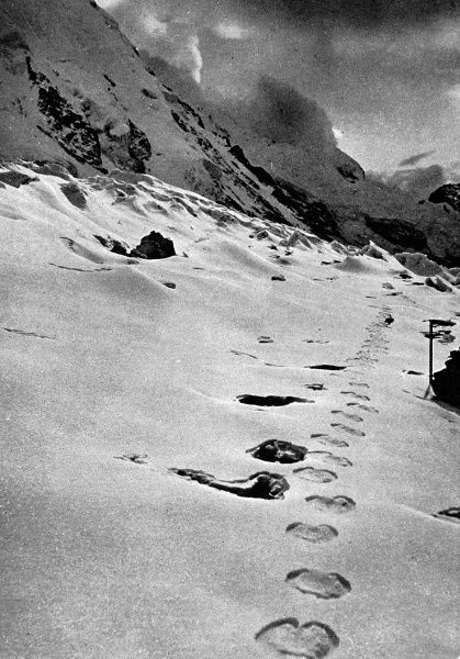 A track made by a langur bounding along and placing all four feet together, or by a bear? The footprints of the abominable snowman in the Himalayan snow. A puzzling find by members of a expedition in 1951