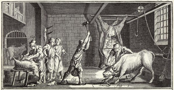 A French butcher prepares to slaughter a bull while others look