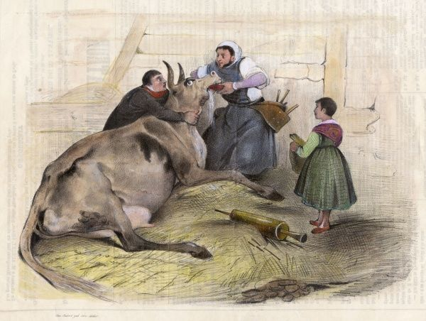 The village doctor in this French country district turns his hand to veterinary work, purging a cow as he might do its owner Date: 1837