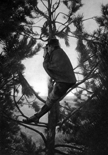 A French artillery observer on the look-out up a tree