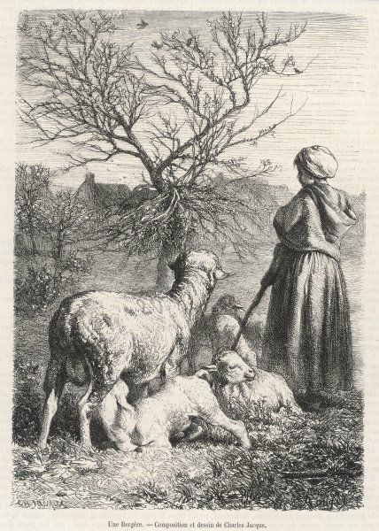 A French shepherdess minds her flock