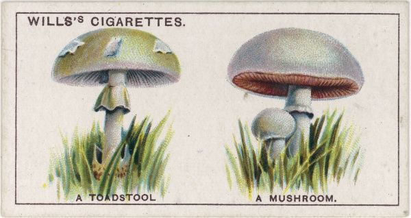 How to tell a toadstool from a mushroom
