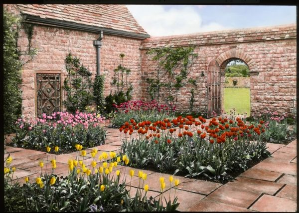 A view of the garden of Mounton House in Chepstow, Gwent, Wales, with different coloured tulips in separate flowerbeds