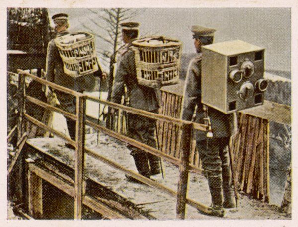 Carrier pigeons used by the German army during the First World War