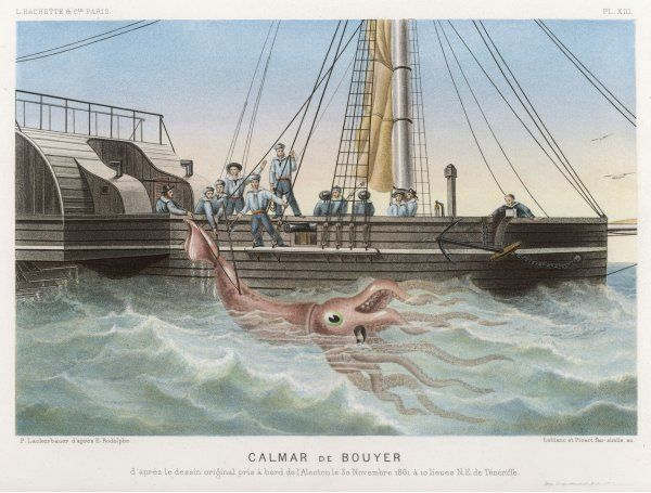 'Calmar de Bouyer', giant squid caught by the French vessel 'Alecto' off Tenerife, Canary Islands