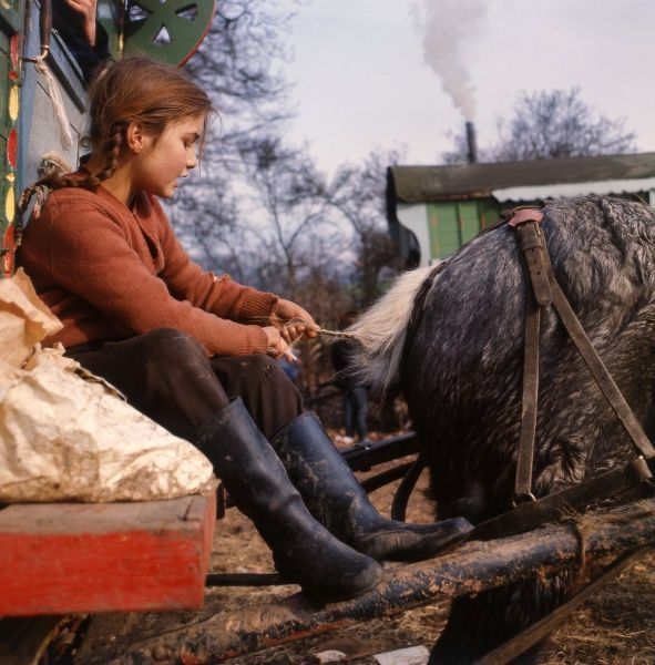 A gipsy girl plaiting the tail of the family horse as she sits on the step of their caravan at an encampment in Surrey. (2 of 2)