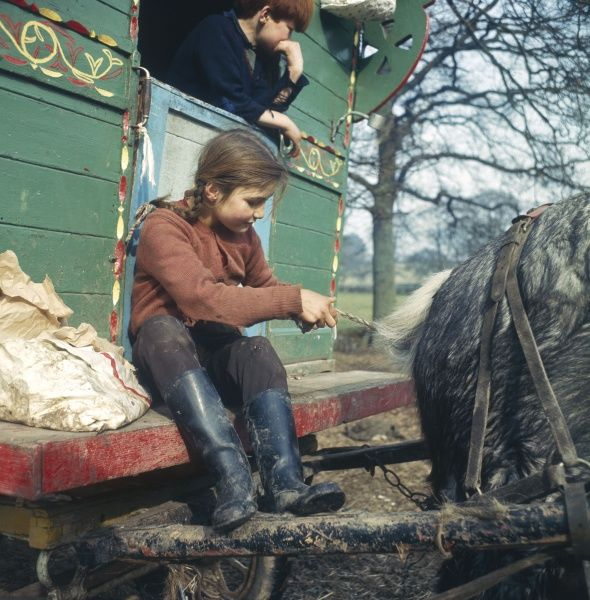A gypsy girl plaiting the tail of the family horse as she sits on the step of their caravan at an encampment in Surrey. (1 of 2)