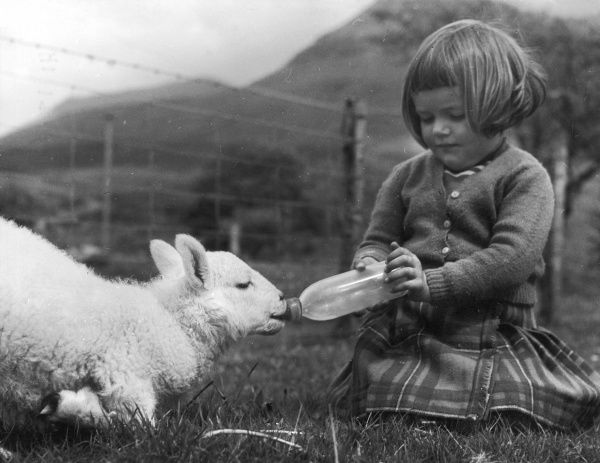 A young girl feeds milk to a lamb from a baby's bottle