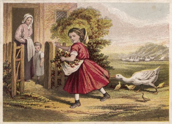 A girl, pursued by a goose, runs to the protection of the garden gate