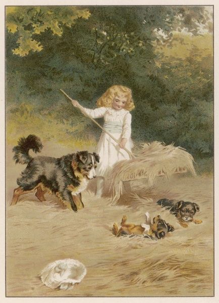 A little girl in a white dress does a spot of haymaking, helped or hindered by her dog and two puppies